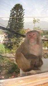 una scimmia alla finestra