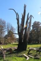Installazione in onore del cedro Libanese